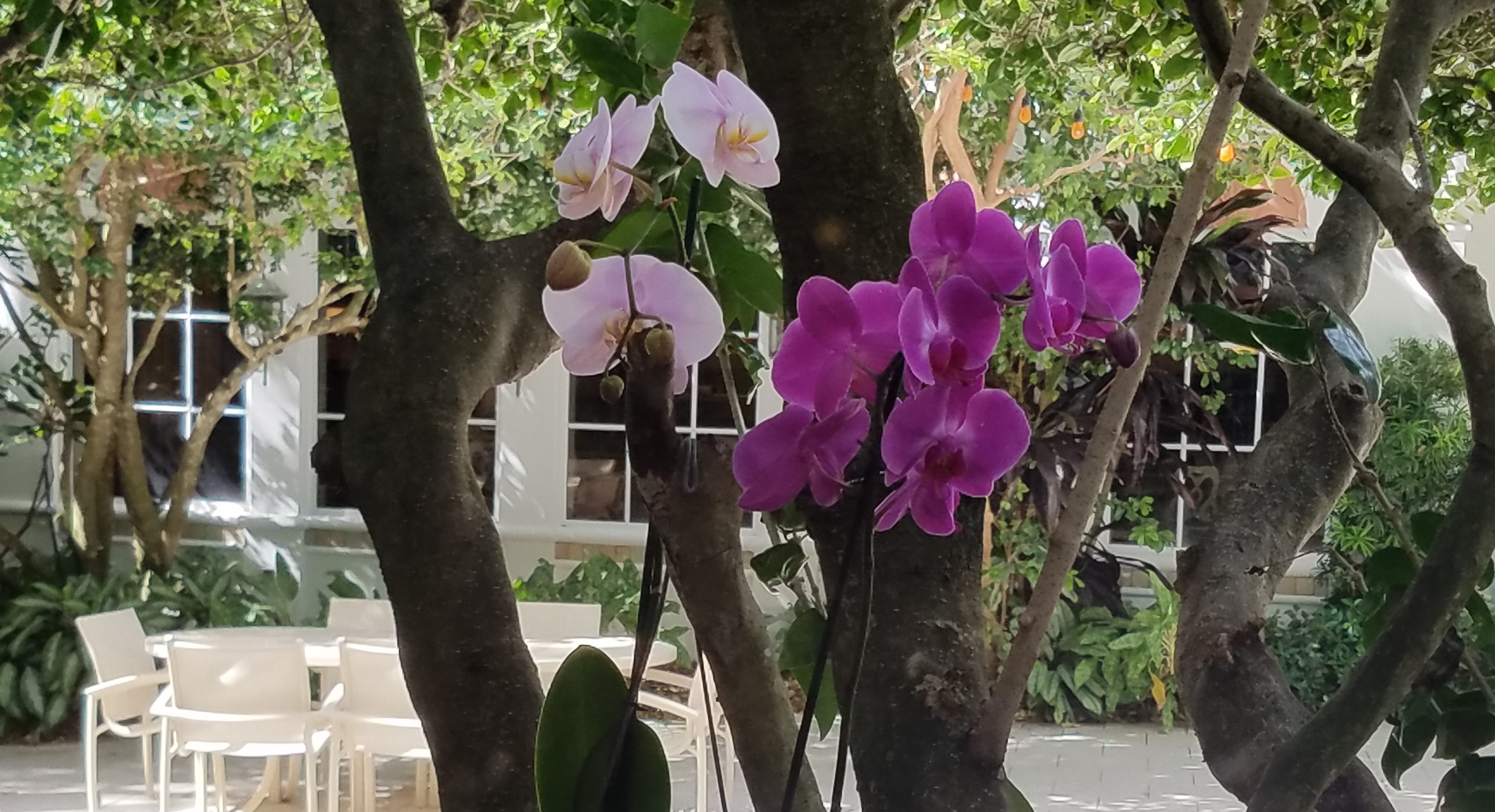 orchid landscaping south florida